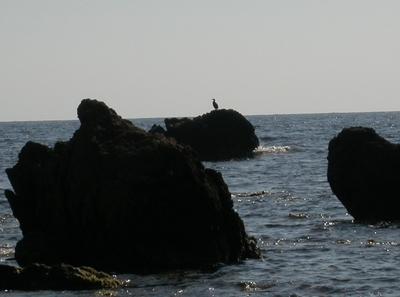 il cormorano