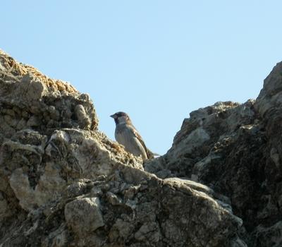 uno degli innumerevoli passeri