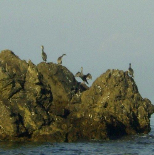 4-cormorani.JPG