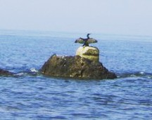 cormorano-ali-aperte.JPG