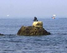 cormorano-collo-avvolto.JPG