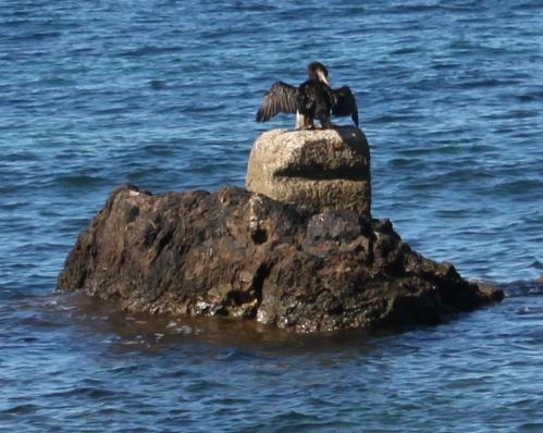 cormorano_sulla_roccia.jpg