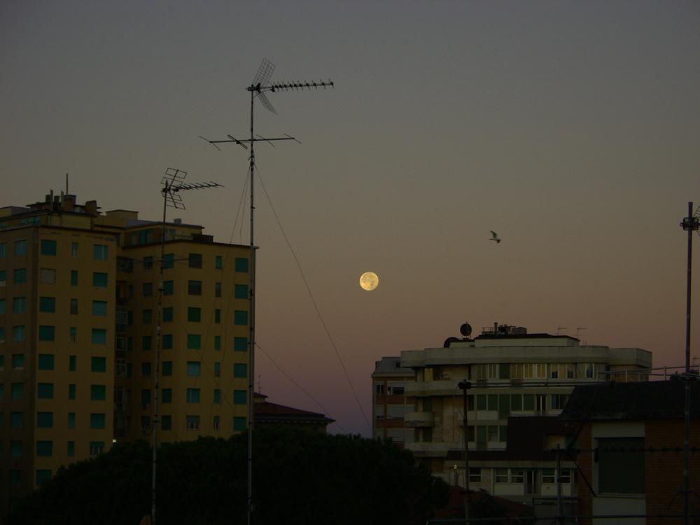 tramonto_luna-piena_gabbiano.jpg